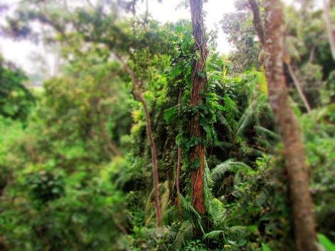 bali-ubud-monkeyforest-indonesia